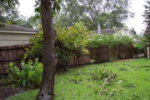 A view of the back yard where the fence and gate are down.