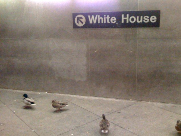 And, as if the ghost bus wasn't enough, when I got to McPherson Square to transfer to the train, there were ducks hanging out in the Metro station -- a bunch of them, just hanging out by the White House sign. Weird.