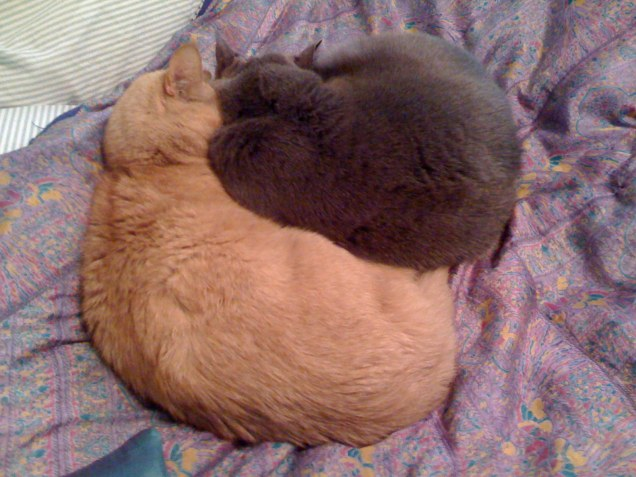 February 15: Even for someone like me, who is not especially sentimental about my pets, I do find this little spooning thing they do to be ridiculously cute.