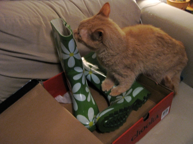 April 22: The world's most ornery cat explores my adorable new rainboots.