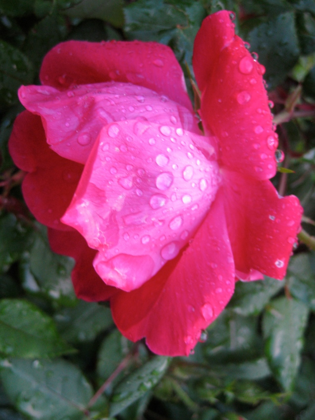 May 7: We're getting May flowers, without having lost April's showers.