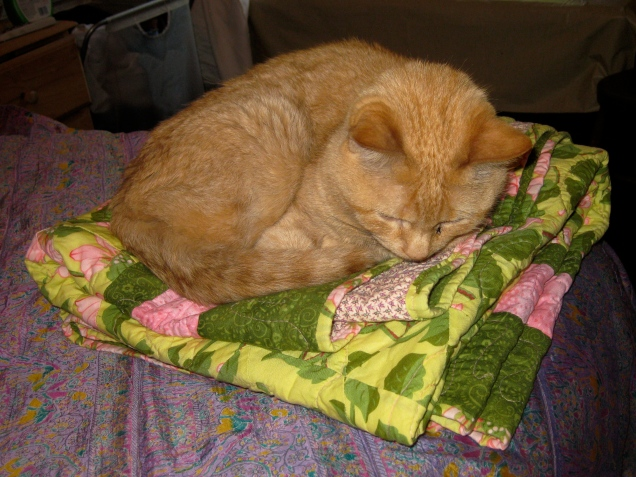 May 30: For my birthday, my friend Marlene made me a beautiful lap quilt, which I have been guarding carefully from the cats, given thier penchant for inappropriate vomiting. It hadn't been out for five minutes yesterday when the cat found it and curled right up on it.