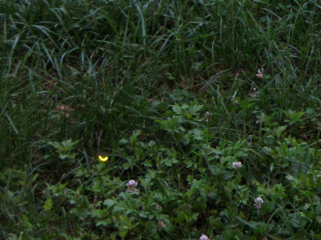 June 16: The triange park by my apartment has been full of fireflies lately. Given how many there are, it's a good bit harder to catch them on film (or, er... an SD card) than I expected.