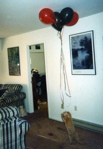 Dingle chasing balloons, Christmas 1997. (Or maybe 1996.)