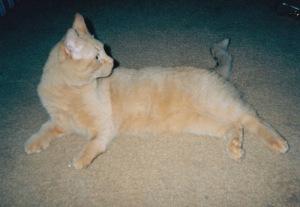 Dingle, c. 1997.