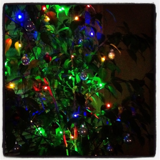 The ficus has been covered in holiday cheer...