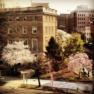 The cherry blossoms across from my office.