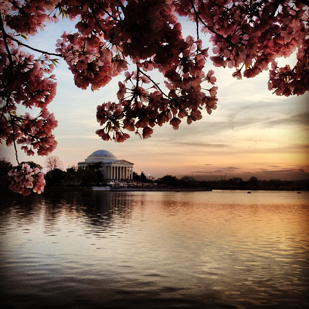 The Jefferson Memorial, cherry blossoms, and sunset. Beauty.
