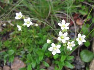 Flowers in Denali National Park.