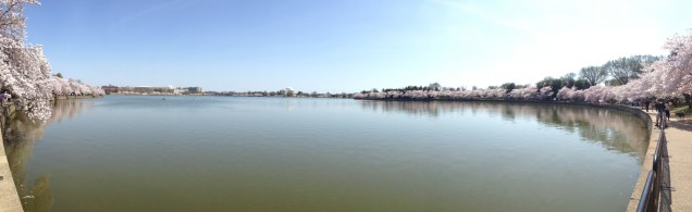 A panorama of the Tidal Basin, taken from near the Martin Luther King, Jr. Memorial. (Click to enlarge)