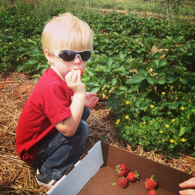 James did an excellent - and enthusiastic - job as our strawberry picking QA manager.