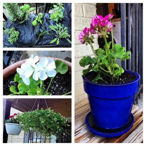 My little container garden.