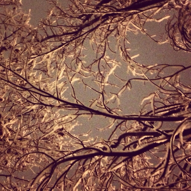 Something new: fresh-fallen snow on tree branches.